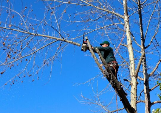 Contact Us-New Tampa FL Tree Trimming and Stump Grinding Services-We Offer Tree Trimming Services, Tree Removal, Tree Pruning, Tree Cutting, Residential and Commercial Tree Trimming Services, Storm Damage, Emergency Tree Removal, Land Clearing, Tree Companies, Tree Care Service, Stump Grinding, and we're the Best Tree Trimming Company Near You Guaranteed!