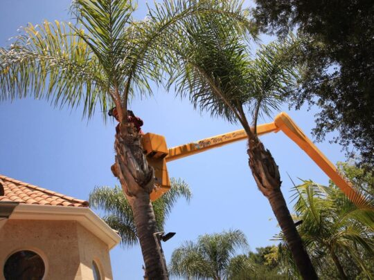 Palm Tree Trimming-New Tampa FL Tree Trimming and Stump Grinding Services-We Offer Tree Trimming Services, Tree Removal, Tree Pruning, Tree Cutting, Residential and Commercial Tree Trimming Services, Storm Damage, Emergency Tree Removal, Land Clearing, Tree Companies, Tree Care Service, Stump Grinding, and we're the Best Tree Trimming Company Near You Guaranteed!