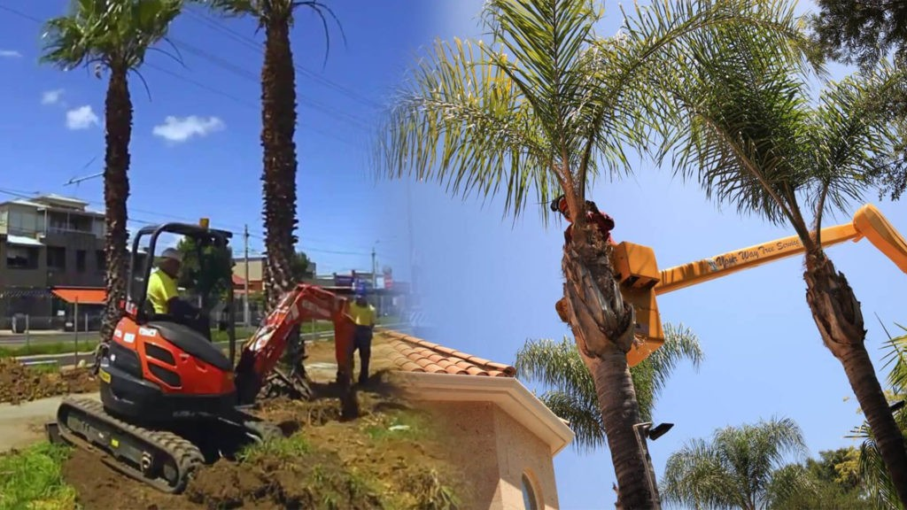 Palm tree trimming & palm tree removal-New Tampa FL Tree Trimming and Stump Grinding Services-We Offer Tree Trimming Services, Tree Removal, Tree Pruning, Tree Cutting, Residential and Commercial Tree Trimming Services, Storm Damage, Emergency Tree Removal, Land Clearing, Tree Companies, Tree Care Service, Stump Grinding, and we're the Best Tree Trimming Company Near You Guaranteed!