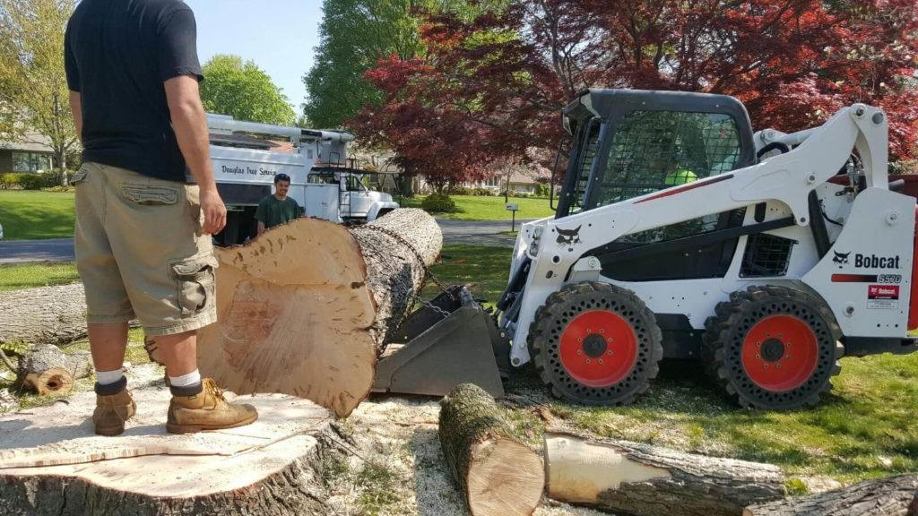 Services-New Tampa FL Tree Trimming and Stump Grinding Services-We Offer Tree Trimming Services, Tree Removal, Tree Pruning, Tree Cutting, Residential and Commercial Tree Trimming Services, Storm Damage, Emergency Tree Removal, Land Clearing, Tree Companies, Tree Care Service, Stump Grinding, and we're the Best Tree Trimming Company Near You Guaranteed!