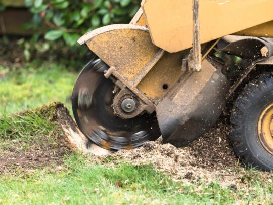 Stump Grinding-New Tampa FL Tree Trimming and Stump Grinding Services-We Offer Tree Trimming Services, Tree Removal, Tree Pruning, Tree Cutting, Residential and Commercial Tree Trimming Services, Storm Damage, Emergency Tree Removal, Land Clearing, Tree Companies, Tree Care Service, Stump Grinding, and we're the Best Tree Trimming Company Near You Guaranteed!