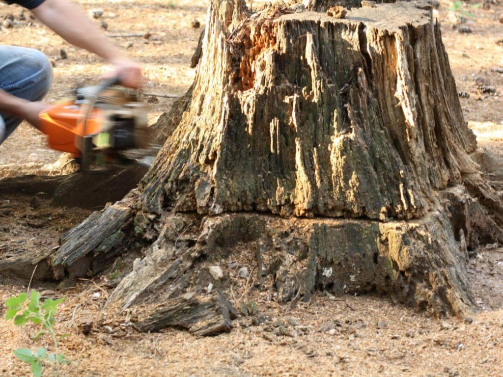 Stump Removal-New Tampa FL Tree Trimming and Stump Grinding Services-We Offer Tree Trimming Services, Tree Removal, Tree Pruning, Tree Cutting, Residential and Commercial Tree Trimming Services, Storm Damage, Emergency Tree Removal, Land Clearing, Tree Companies, Tree Care Service, Stump Grinding, and we're the Best Tree Trimming Company Near You Guaranteed!