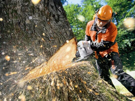 Tree Cutting-New Tampa FL Tree Trimming and Stump Grinding Services-We Offer Tree Trimming Services, Tree Removal, Tree Pruning, Tree Cutting, Residential and Commercial Tree Trimming Services, Storm Damage, Emergency Tree Removal, Land Clearing, Tree Companies, Tree Care Service, Stump Grinding, and we're the Best Tree Trimming Company Near You Guaranteed!