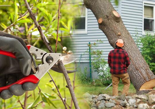 Tree pruning & tree removal-New Tampa FL Tree Trimming and Stump Grinding Services-We Offer Tree Trimming Services, Tree Removal, Tree Pruning, Tree Cutting, Residential and Commercial Tree Trimming Services, Storm Damage, Emergency Tree Removal, Land Clearing, Tree Companies, Tree Care Service, Stump Grinding, and we're the Best Tree Trimming Company Near You Guaranteed!